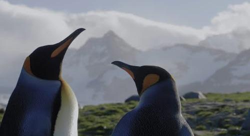 A Voyage of Discovery: Antarctica, South Georgia & Falkland Islands