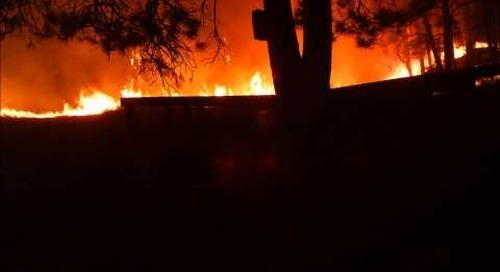 Wild Cats and Wildfires in Nebraska