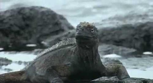 Galapagos Islands Nature Travel