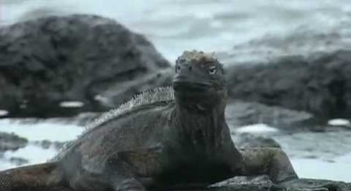 Galapagos Islands Nature Travel