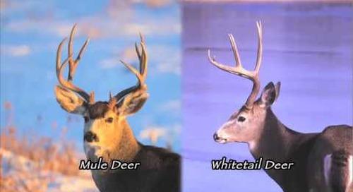 Nebraska Outdoor Heritage - Deer