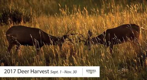 Nebraska's 2017 Fall Deer Harvest Numbers