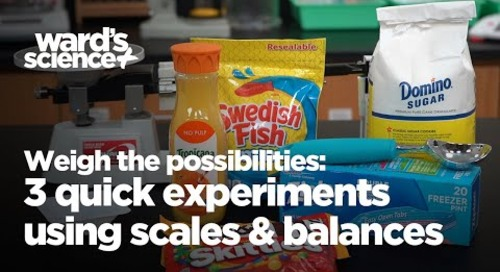 Weigh the Possibilities: 3 Quick Experiments Using Scales and Balances