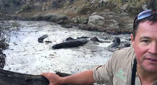 Tanzania Safari with Jeff Corwin Segment