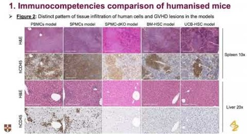 Predicting CRS using humanized mice