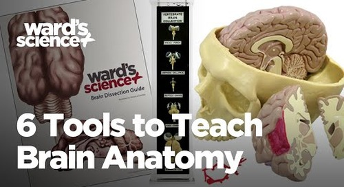 6 Tools to Teach Brain Anatomy