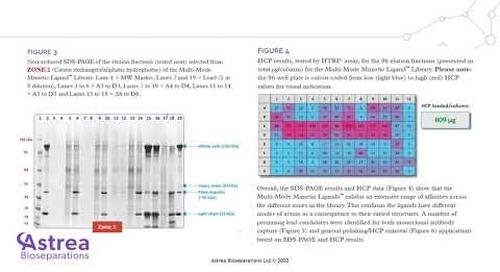 Multi-Mode Mimetic Ligand™ Library presentation