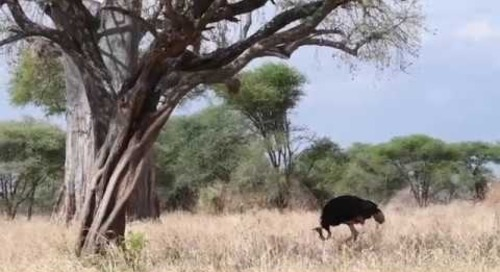 A Glimpse of Tarangire National Park