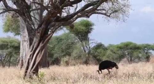 A Glimpse of Tarangire National Park