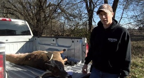 How To Remove Lymph Nodes For CWD Testing
