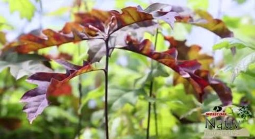 When to Plant A Tree | Nativ Nurseries