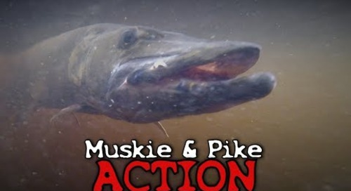 Musky and Pike Fishing - Northwoods of Wisconsin