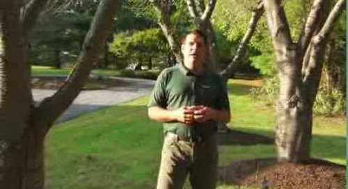 Tree Service Tips: Preparing Your Home - and Landscape - for Sale