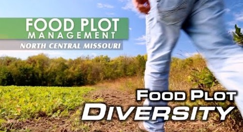 Food Plot Diversity   MossyOakGamekeepers
