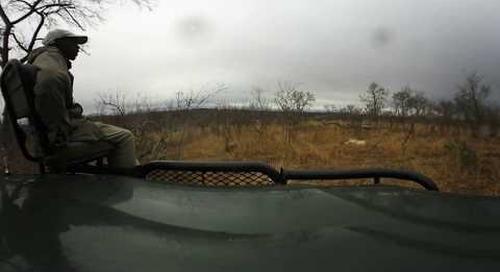 360 degree - Sabi Sand game drive, lioness resting