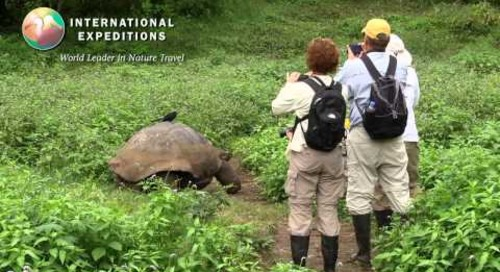 Giant Tortoises of the Galapagos Islands