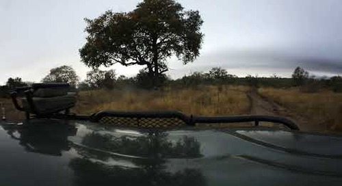 360 degree - Sabi Sand game drive, following mobile leopard