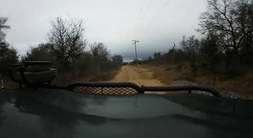 360 degree - Sabi Sand game drive, finding mobile leopard