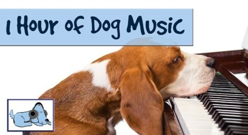 OVER 1 HOUR OF RELAXING DOG MUSIC! Music for Dogs; Stop Barking! Great for Crate Training 🐶 RMD02