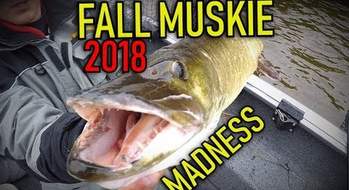 2018 Fall Muskie Fishing Madness!