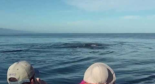 Galapagos Cruise Guests Spot Blue Whale