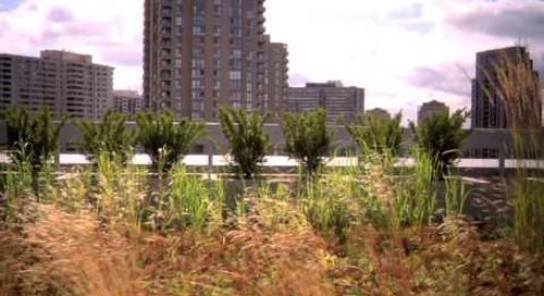 Esri Canada's Garden in the Sky