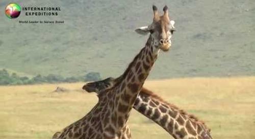 Wildlife of Africa