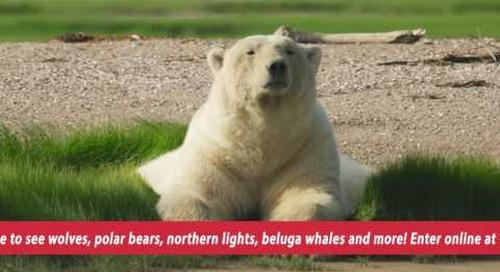 Manitoba Wild Contest Video