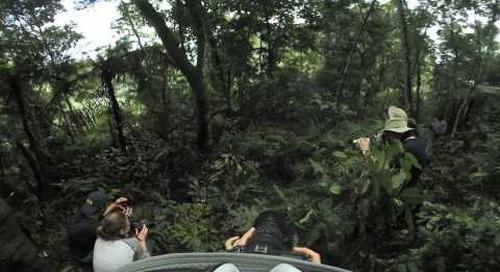 Uganda - Gorilla Trek 360º - gorilla brothers