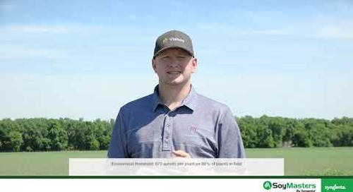 Aphids in Soybeans
