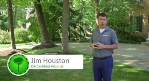 Behind the Scenes: Professional Tree Service Consultation