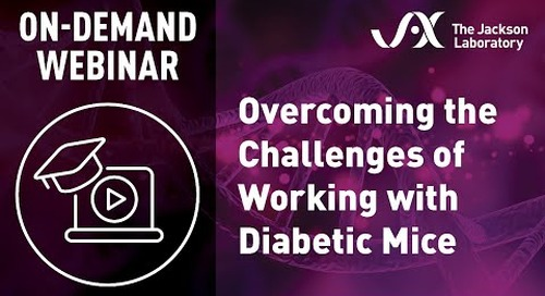 Overcoming the Challenges of Working With Diabetic Mice