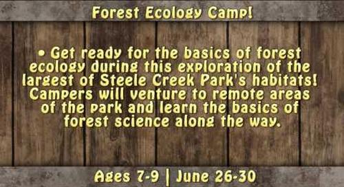 Steele Creek Park Summer Nature Camps 2017!