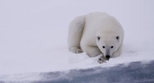 Spitsbergen: The Wildlife Capital of the Arctic