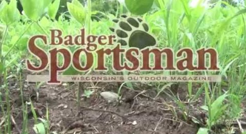Mid-Summer Food Plot Tips