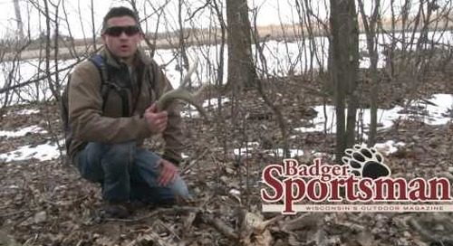 A Quick Shed Hunting Tip