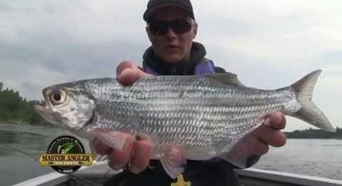 Jumbo Mooneye Fishing in Manitoba - Manitoba Master Angler Minute