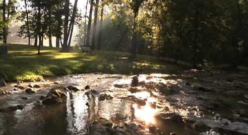 Steele Creek Morning