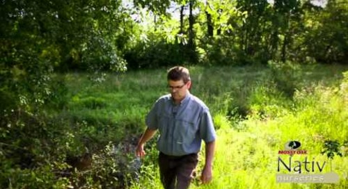 Fertilizing Mature Oak Trees