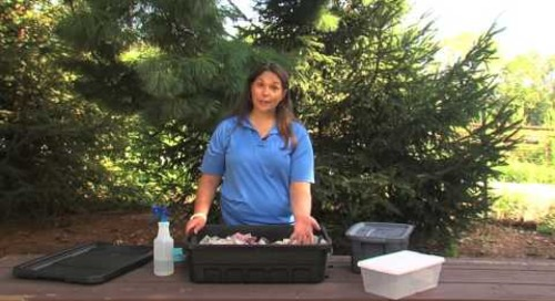 Using Your Worm Bin for Investigations