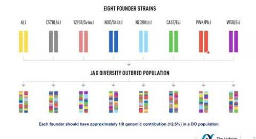 The Genetic Diversity of Diversity Outbred Mice