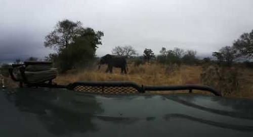 360 degree - Sabi Sand game drive, elephants