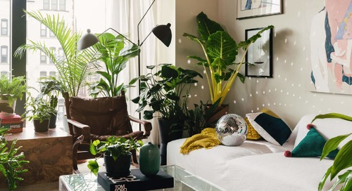 Now You Can Order Healthy Houseplants Through West Elm