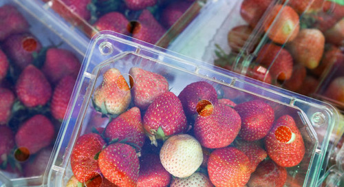 Washington State's Plastic Waste Legislation Presents Opportunity for Packaging Alternative Startups