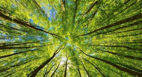 Green-Finance-Wachstum explodiert