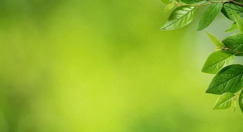 """Interview mit Bettina Grabmayr: Nachhaltigkeit und Sorgfaltspflicht – """"Mehrwerte erzielen"""""""