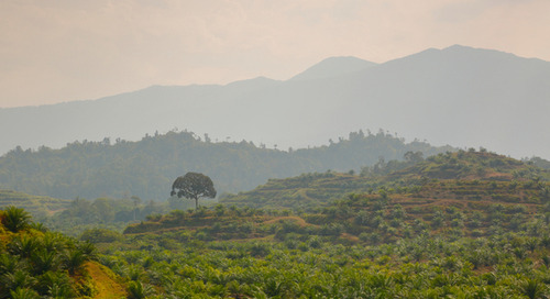 'We are in 2019, we don't have time': Nestlé's 'call to arms' on deforestation