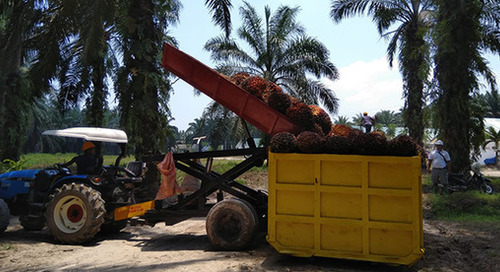 Eight severe human rights issues in palm oil supply chain addressed with priority