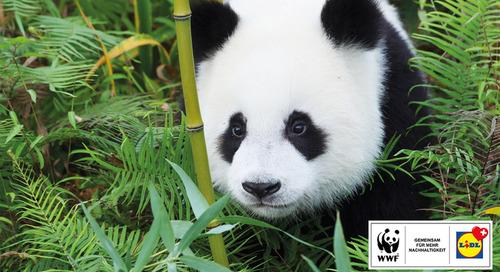 Partnerschaft mit WWF Schweiz | Lidl
