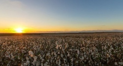Wrangler takes sustainable cotton programme to Europe